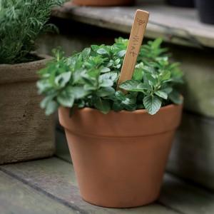 Garden Marker identifying mint plant.
